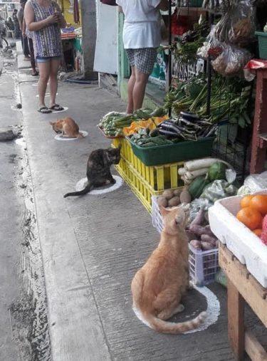 猫たちもコロナ対策…?!距離をあけて座る姿が可愛すぎる…!