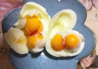 「初めて聞いた」パックの卵、全10個が二黄卵 珍現象に「縁起いい」