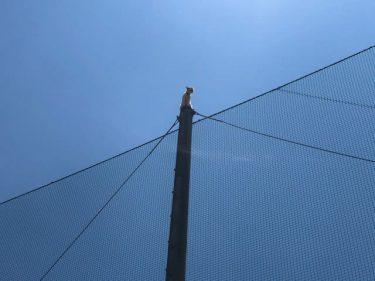 近大で珍事件発生! 猫が高さ10mの電柱から降りられずギャン鳴き…救出までの一部始終を同大公式がツイート