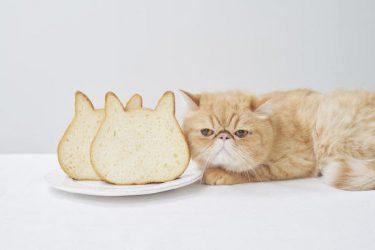 猫好き必見!犬派も注目♡ 可愛すぎる「猫型食パン」を通信販売でGET