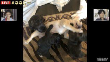 草なぎ剛、コロナ禍で出産した愛犬クルミちゃんと子供達に感謝「救われている」