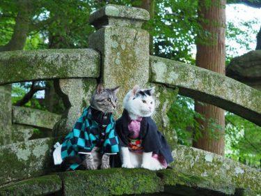 猫の鬼殺隊参上!世界初お遍路結願達成のニャン治郎たち 「かわいすぎて悶える」とフォロワー増殖中
