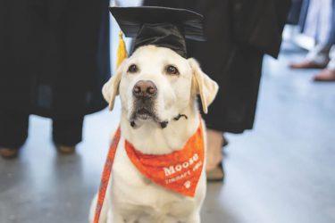 未来の獣医を支えた、セラピー犬「ムース」が名誉博士号授与!