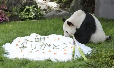 父の日、パンダに感謝込め贈り物