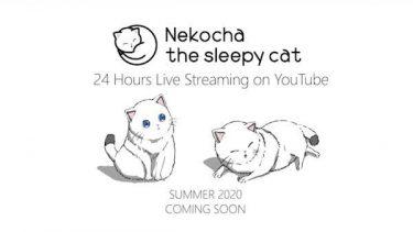 猫×アニメーション×快眠音楽のコラボレーション、新感覚の癒しYouTubeチャンネルが誕生!