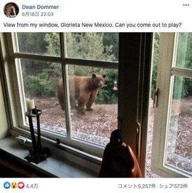 家の窓をのぞいてきたのは…自宅隔離中に人気のFacebookグループが、なお活発な理由【新型コロナ】
