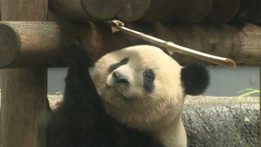 久しぶり! シャンシャンは3歳に 上野動物園 4カ月ぶり再開