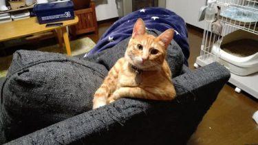 思わずびっくり?!「まあ、ここに座って話そうや」な猫ちゃんの態度が可愛いすぎる。