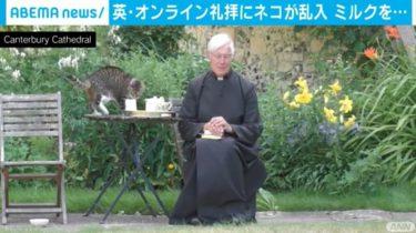 「お友達がやってきました」 オンライン礼拝中に猫が乱入