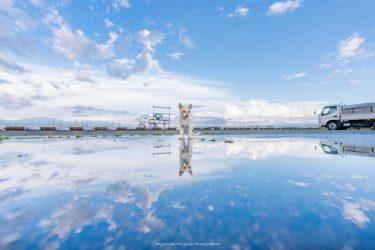 ここはもしや「ウユニにゃん湖」!? 雨上がりの水たまり…集まる猫たちを撮影したら「奇跡の光景」