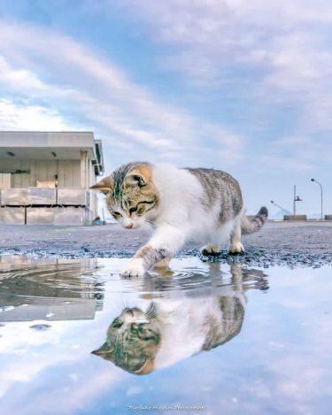 「ウユニ塩湖みたい」青空と猫の幻想的な写真。撮影の裏側は…?