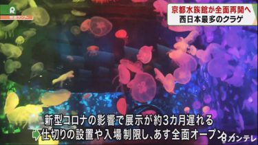"""京都水族館リニューアル """"西日本最多""""5000匹の『クラゲの展示』が16日から全面オープン"""