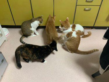 「いるニャ、あいつがいるニャ」…集まるネコさんたちに「もうだめ。絶対になんかいる」 扉の中にいたのは…?