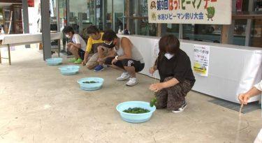 香美町で夏恒例「ピーマン釣り大会」