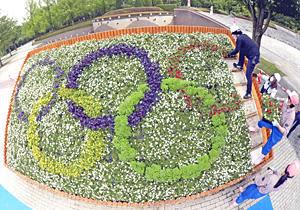 花壇に咲いた『五輪マーク』完成! 福島・あづま総合運動公園