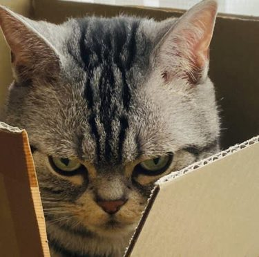 ニャられたらニャり返す、 ニャン倍返しだ! 半沢ニャオ樹になった猫、かわいすぎる