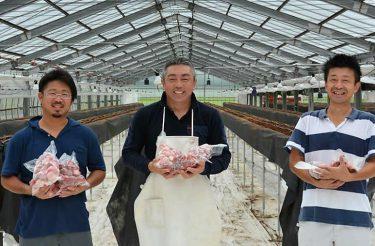 イチゴ150キロ無料で使って! 佐倉の農園、コロナ禍の飲食店を応援