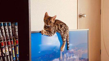 「ダメー! ボクの水ニャ!!」…コップの水をはたき落としたやんちゃな子猫、実は父子の絆を深めた天使だった