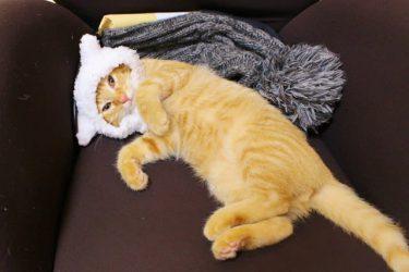 「撫でてもええんやで」と飼い主を誘う、あざとカワイイ猫の猛アピールに悶絶者続出!