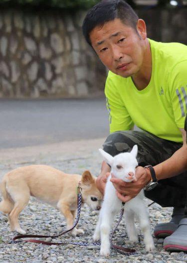 ヤギの赤ちゃん「スイカ」子育て中 長与町の深井さん