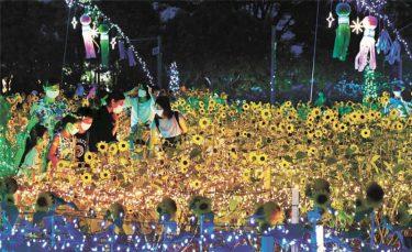 満開ヒマワリ 七夕の輝き 仙台・農業園芸センターで夜間イベント