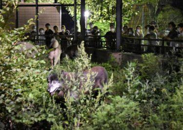 旭山で「夜の動物園」開始
