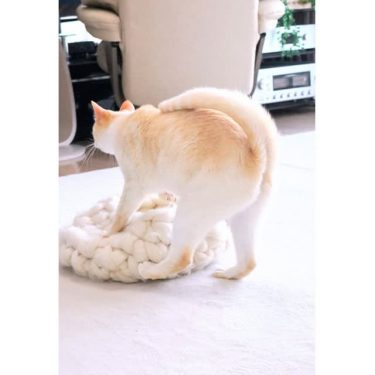 「なんとピーチなおちり」可愛い桃尻の猫さん…実は、大胆なジャンプ技を繰り出す忍者猫だった!