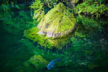 まるでシシガミの森…見ているだけで涼しくなる 透き通った池の写真が「神秘的で綺麗」と話題