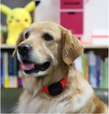 もっと愛犬に寄り添える!? 感情と健康を分析するAI搭載の首輪「Petpuls」