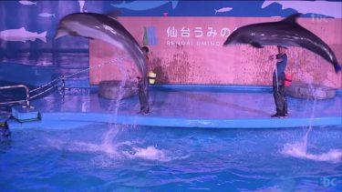 仙台うみの杜水族館で夜間営業 夜間ならではのイルカショー人気