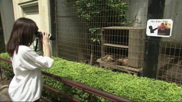 盛岡市動物公園「ホントの夜の動物園」準備進む 夜の動物の世界を観察<岩手・盛岡市>