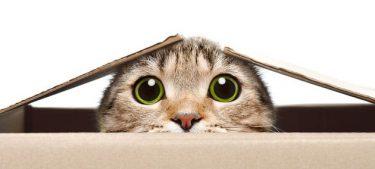 猫が自宅で仕事の邪魔をする…それはあなたと絆を強めたがっているからかも