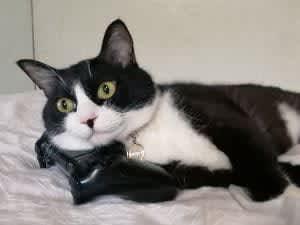 「なんか悪いことしてる?」コントローラーを枕にしちゃう猫の表情がたまらない – 実は猫あるある?