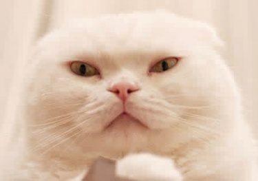 「倍返しだ!」半沢直樹にも負けない? 顔面圧がすごい猫・むくさん【話題の猫】