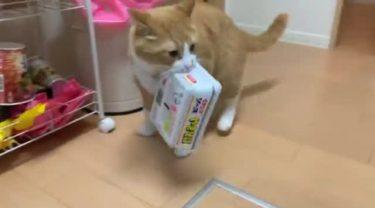 たった一度のあやまちで……「ペヤング泥棒」と呼ばれた猫の動画が話題に