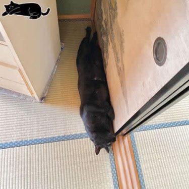 """「なにが起きた」部屋のすみで猫が""""やさぐれ顔""""!? その理由とは – ツイッターで大人気"""