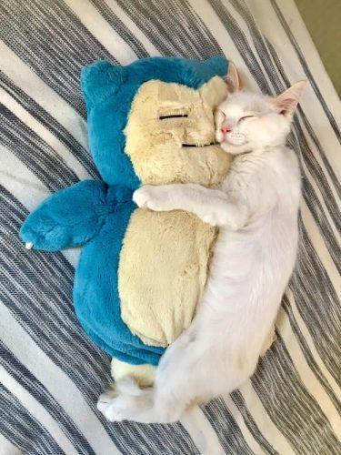 これぞ、相思相愛。カビゴンと猫ちゃんのとろける添い寝姿がたまらない。