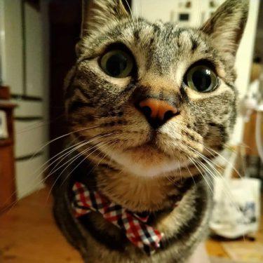 水路に落ちていた子猫、運良く工事中の作業員に救助され助かる 保護したら甘えん坊&美猫に成長