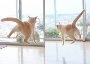 まさか宇宙人に連れ去られてる…? 猫じゃらしに夢中なニャンコを撮影したら、無重力感が半端なかった