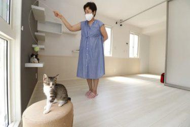 こんなおうちに住みたいニャ 猫カフェオーナーが企画した専用アパートメントが誕生