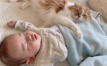 もう、めっちゃ仲良し♡ 猫と赤ちゃんが超絶かわいくて癒される!