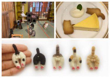 猫が似合う街で11回目の「ねこまつり at 湯島」開催! 新企画も登場