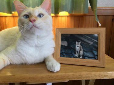 「猫を亡くした悲しみを癒したい」失意のどん底で通い始めた猫カフェ…運命の猫と出会い、人生が再び明るく