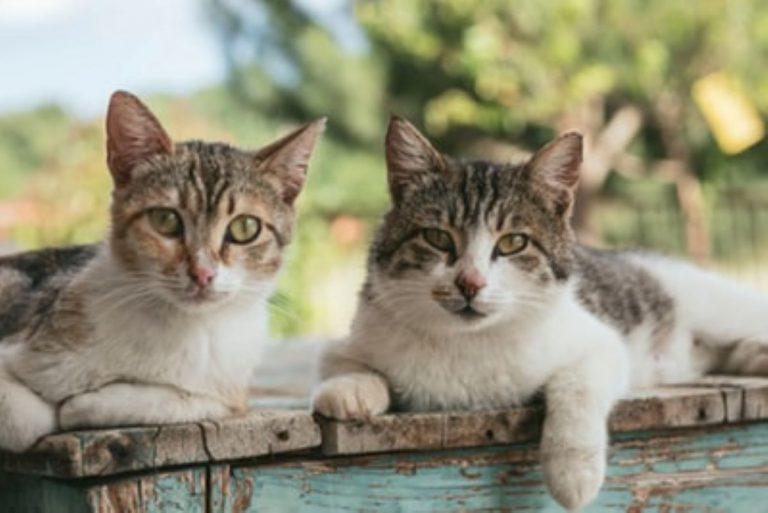 猫好き芸能人イメージ