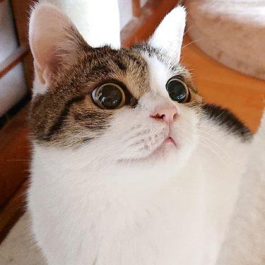 野良の母猫が置き去りにした子猫、ひどい猫風邪をひいていたがみるみる元気に、すくすく育つ