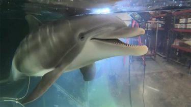 動物に優しく イルカ型ロボット アメリカ