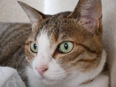 あなたの愛猫はどこから来た? 日本猫のルーツを調べるゲノムプロジェクトが進行中