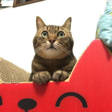 相棒だった愛犬が亡くなって意気消沈した猫、天真爛漫な弟分の猫を迎え、元気を取り戻す