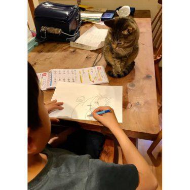 宿題よりも好きな絵を描く時間が「大切で尊い」という母の発言が話題…そんな小1男子の猫の絵が魅力的すぎる