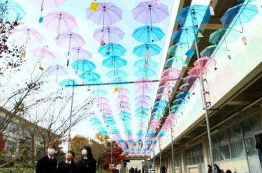 見上げれば「傘の花」324本 勝間田高生が中庭に設置